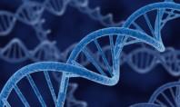 """Εγκρίθηκε στη Βρετανία η σύλληψη εμβρύων που θα φέρουν το DNA τριών """"γονέων"""""""