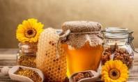 Το μέλι Ολύμπου δρα ενάντια στα βακτήρια;