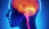 Ο γυναικείος εγκέφαλος αυξομειώνεται κατά τον κύκλο της εμμηνόρροιας