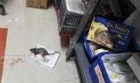 Ξέφραγο αμπέλι το νοσοκομείο Κιλκίς! Ποντίκια κάνουν βόλτες